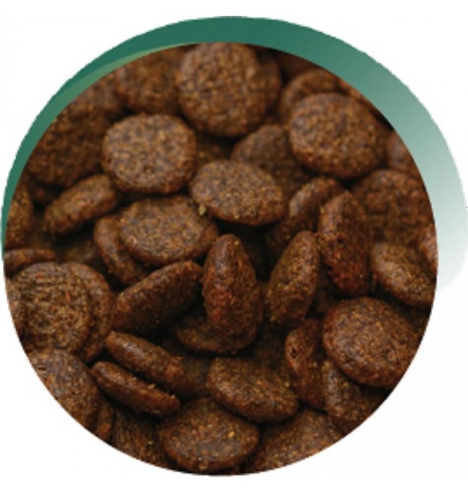 Venison Cat Food Uk